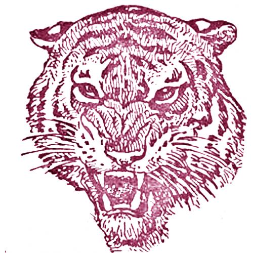 Tiger's Head Vector