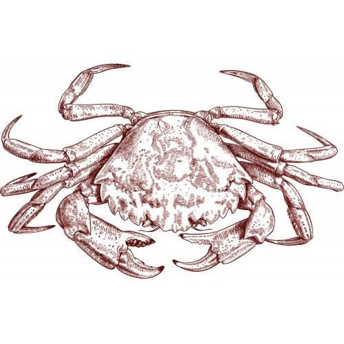Sea Crab Vector