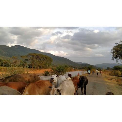 Biking - way to the mountain