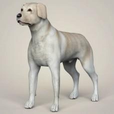 3D Model of Dog