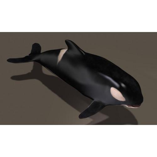 3D Model of Killer Whale