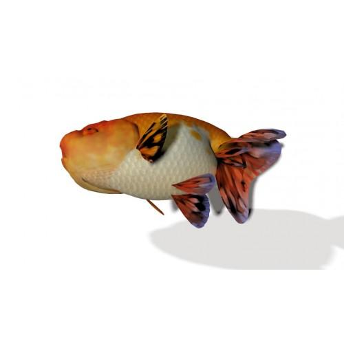 3D Model of Goldfish